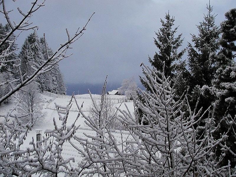 Winter.jpeg